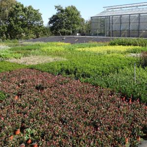 arbustes-d-ornement