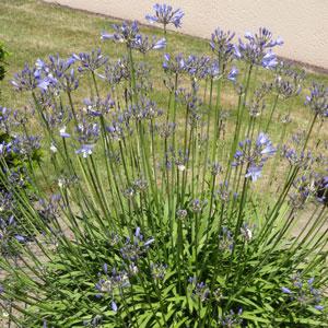plantes-mediterraneennes